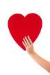 Ein rotes Herz in der Hand - isoliert