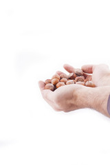 hazelnuts in hands