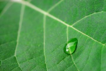 A drop of dew on a leaf
