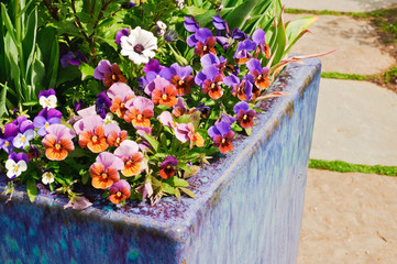 Container gardening. Spring planting.