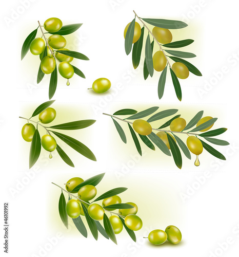 Set of backgrounds with green olives. Vector