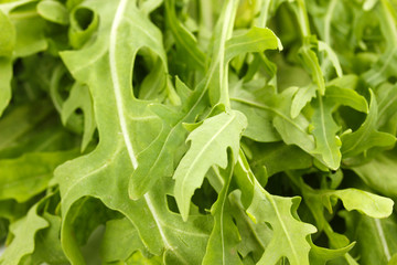 Fresh rucola salad or rocket lettuce leaves isolated on white