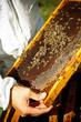 Obrazy na płótnie, fototapety, zdjęcia, fotoobrazy drukowane : Beekeeper