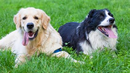 amici cani