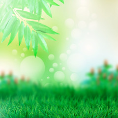 green leaves garden abstract background
