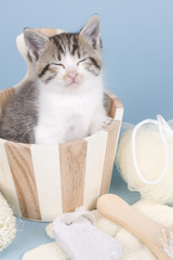 kitten sitting on colored background