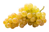 Fototapety White grape (riesling) fully isolated