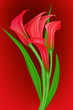 calla on red