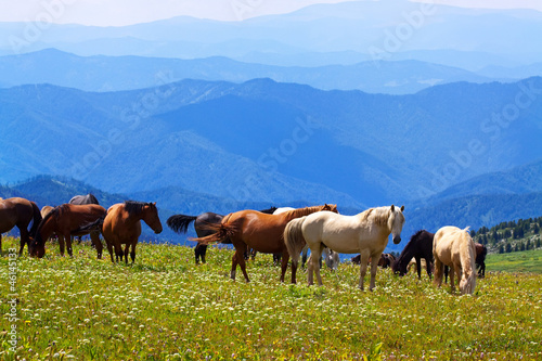 mountains landscape with   horses