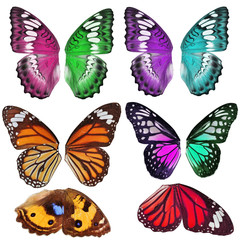 Many Colorful butterfly wing