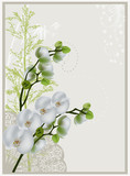white orchids on grey background
