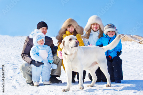 Winter labrador dog