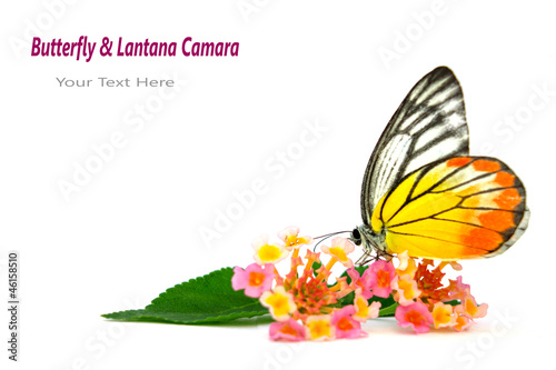 Butterfly & Beautiful flowe
