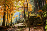 foresta in autunno