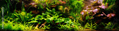 Poster Water planten Decorative Aquarium