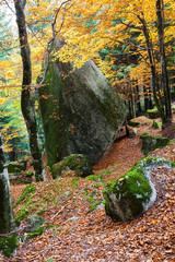 grande masso nella foresta