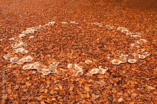 Fairy Ring of Fungus