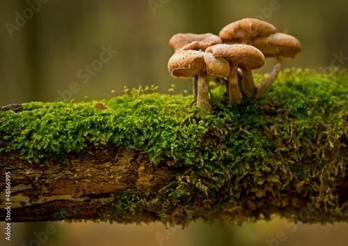 Leinwanddruck Bild Pilzfamilie
