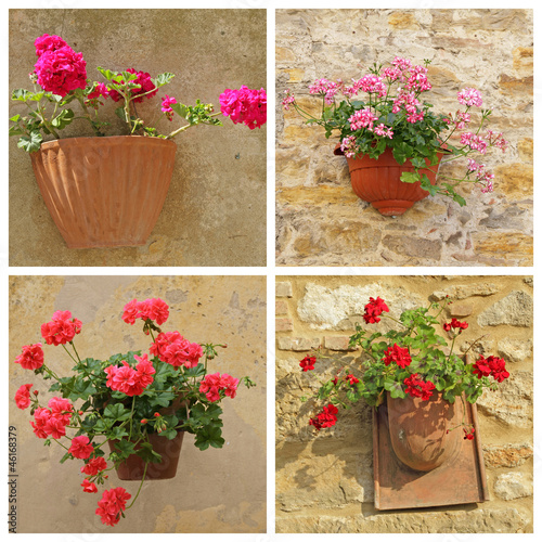 poster with geranium flowers in rustic pots hanging on wall