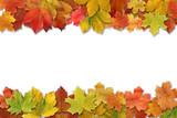 Fototapety Herbstblätter