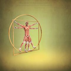 Anatomía de Hombre de Vitruvio