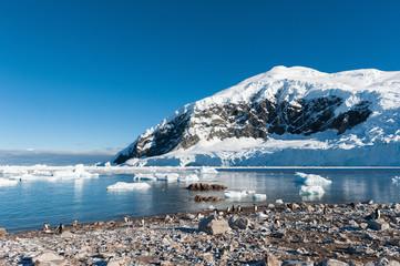 Gentoo penguins near the mountain
