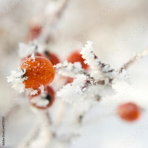 Hoarfrost on leaves © dziewul