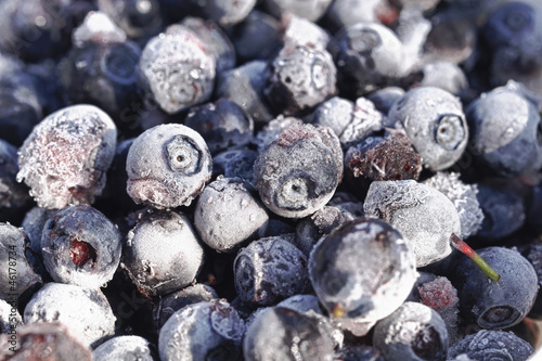 Frozen Bilberries Close-Up - HDR Image