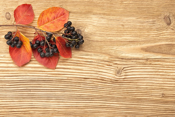 Black chokeberry on a wooden background