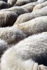 Graue Pelzdecke für den kalten Winter zum einkuscheln