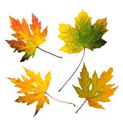 Herbst: Bunte, freigestellt Blätter