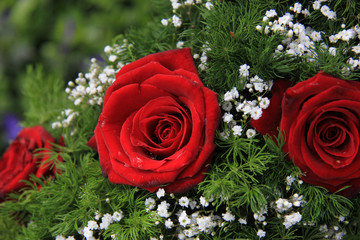 Red roses and gypsophila