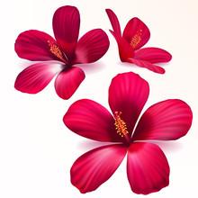 Vecteur fleurs rouges