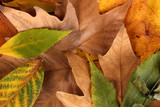 Fototapety Composition from yellow autumn leaves background