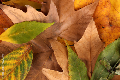 Composition from yellow autumn leaves background