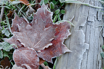 Herbst, erster Frost