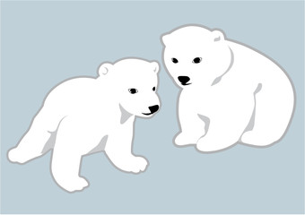 Due cuccioli di orso polare bianco