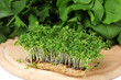 Fresh cress salad on wooden board