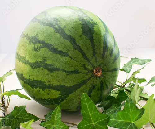 Whole watermelon on light background