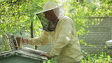 Beekeeper at work with fumigation apparatus