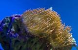 Coral reefs © Radoslaw Maciejewski