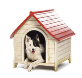 Border Collie in a kennel against white background poster