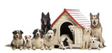 Large group of dogs in and surrounding a kennel poster