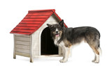 Border Collie standing next to a kennel against white background poster