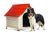 Border Collie tied to a kennel and portrait poster