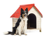 Border Collie tied next to a kennel and looking away poster