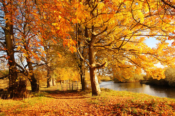 Beautiful Autumn in the Park, Scotland