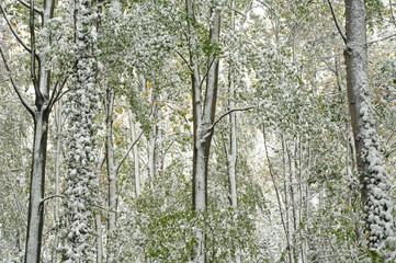 Wald Herbst/Winter 3