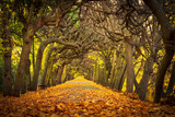 Fototapety Autumnal alley  in the park of Gdansk, Poland