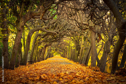 Fototapety, obrazy : Autumnal alley  in the park of Gdansk, Poland